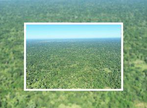Está aberto novo leilão de uma Fazenda em Barão de Melgaço, no Mato Grosso!